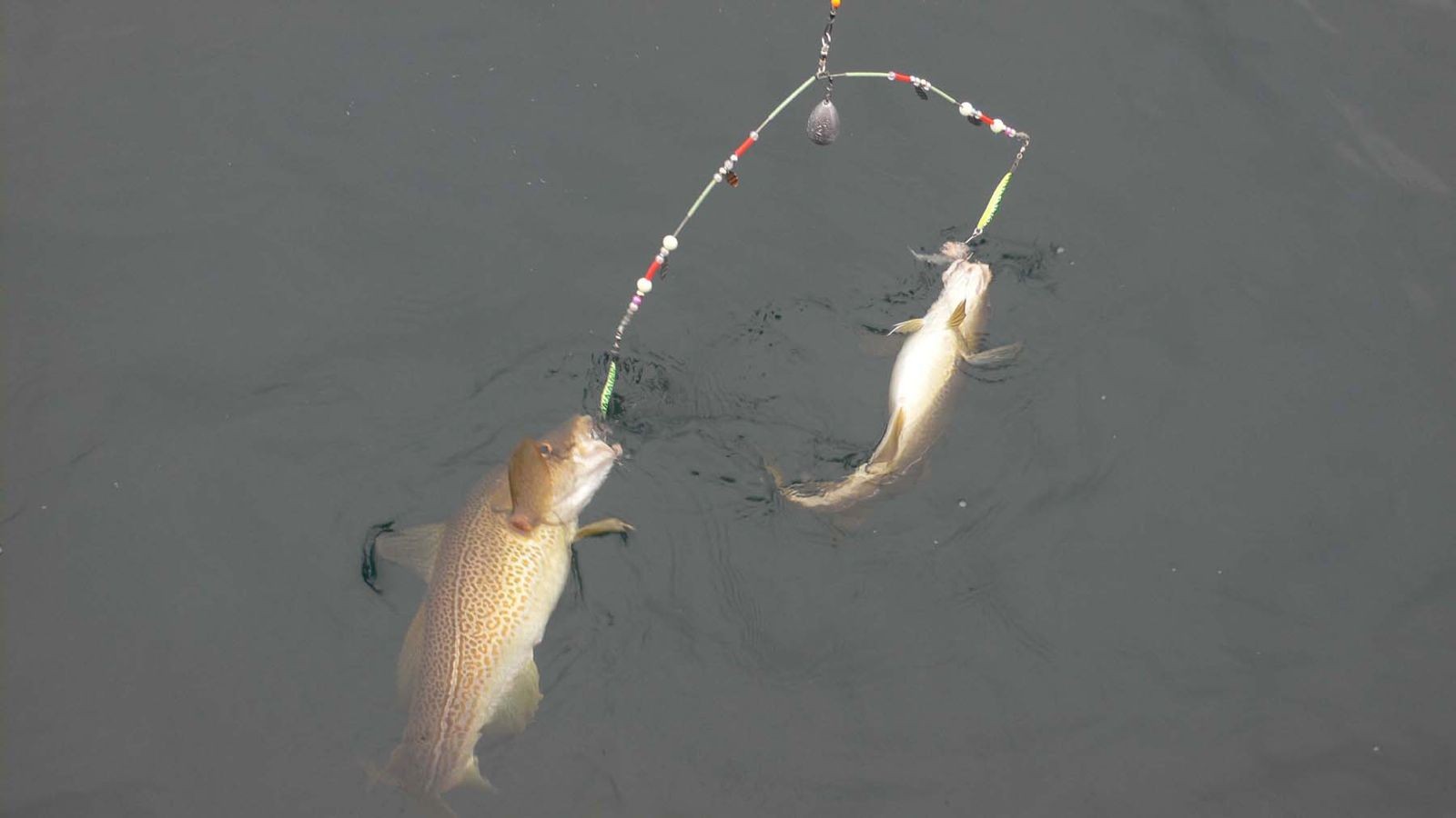 Коромысло на рыбалку своими руками
