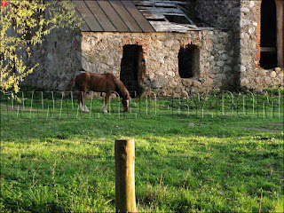 Бобовня. Конь у руин винокурни
