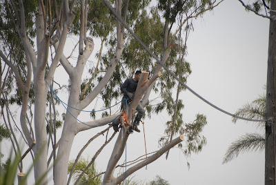 professional tree cutting service