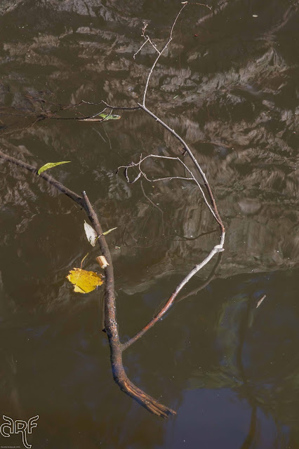 drifting branch and leaves