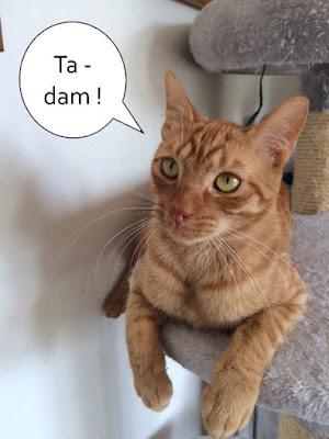 Magnifique chat roux de l'école du chat libre de toulouse