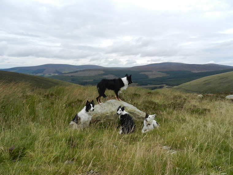 Dogs on Wicklow hike