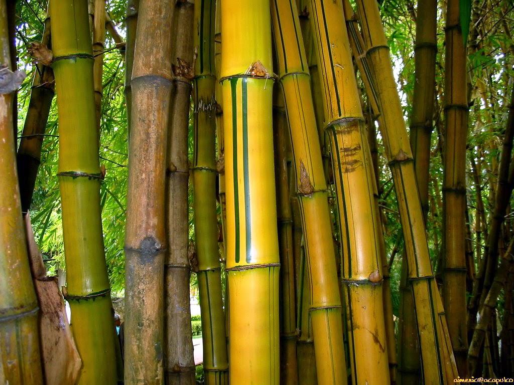 Aneka tanaman hias | pohon perdu | pohon pelindung | rumput taman | tanaman air