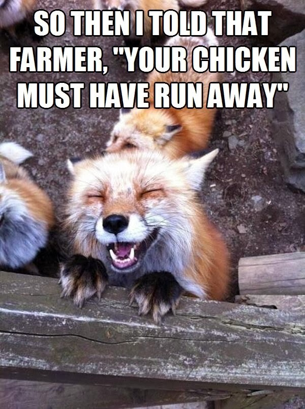 30 Funny animal captions - part 19 (30 pics), laughing fox meme