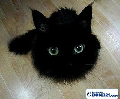 Kecomelan Si Kucing