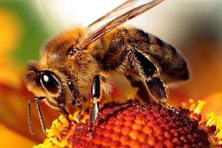 beekeeper beekeeping honey bees neonicotinoid