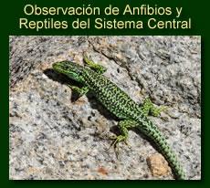 http://iberian-nature.blogspot.com.es/p/ruta-tematica-observacion-de-anfibios-y_2.html