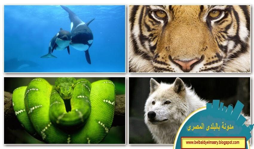 حمل وشاهد اجمل 400 خلفيه للحيوانات برابط مباشر 11.2.2014 | 400 amazing animals full hd wallpapers