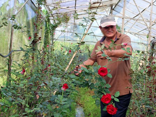 Gia Lai: Đổi đời nhờ trồng hoa công nghệ cao