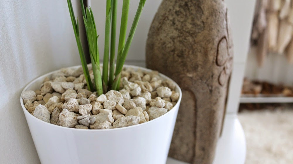 White Coral Top Dressing For House Plants