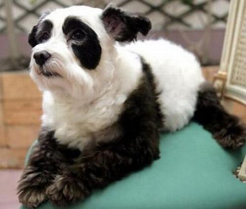 Las fotos más graciosas de perros