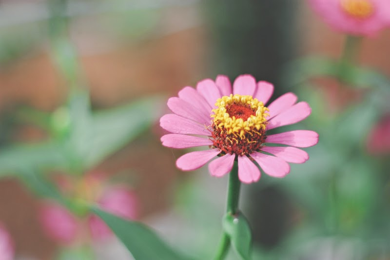 Photography Tips and Trick : Flower in Mini Garden