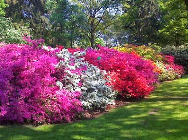 Rododendron Park - Brema -