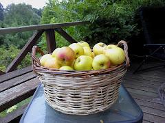 Cosecha de Manzanas