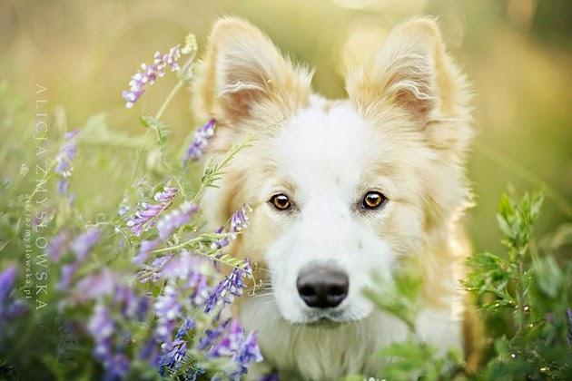 dogs photography Alicja Zmyslowska