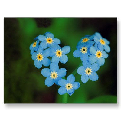 Paradise Found Forget Me Not