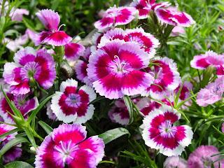 Cvijeće, proljeće slike besplatne pozadine za desktop download