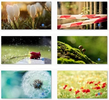 Simple Elegant and Fresh Nature Theme / Themepack for Windows Free Download