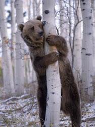 Grizzlyloghomes.com