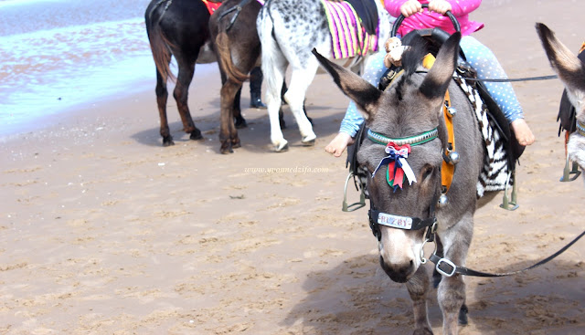 Blackpool Donkeys On The Beach