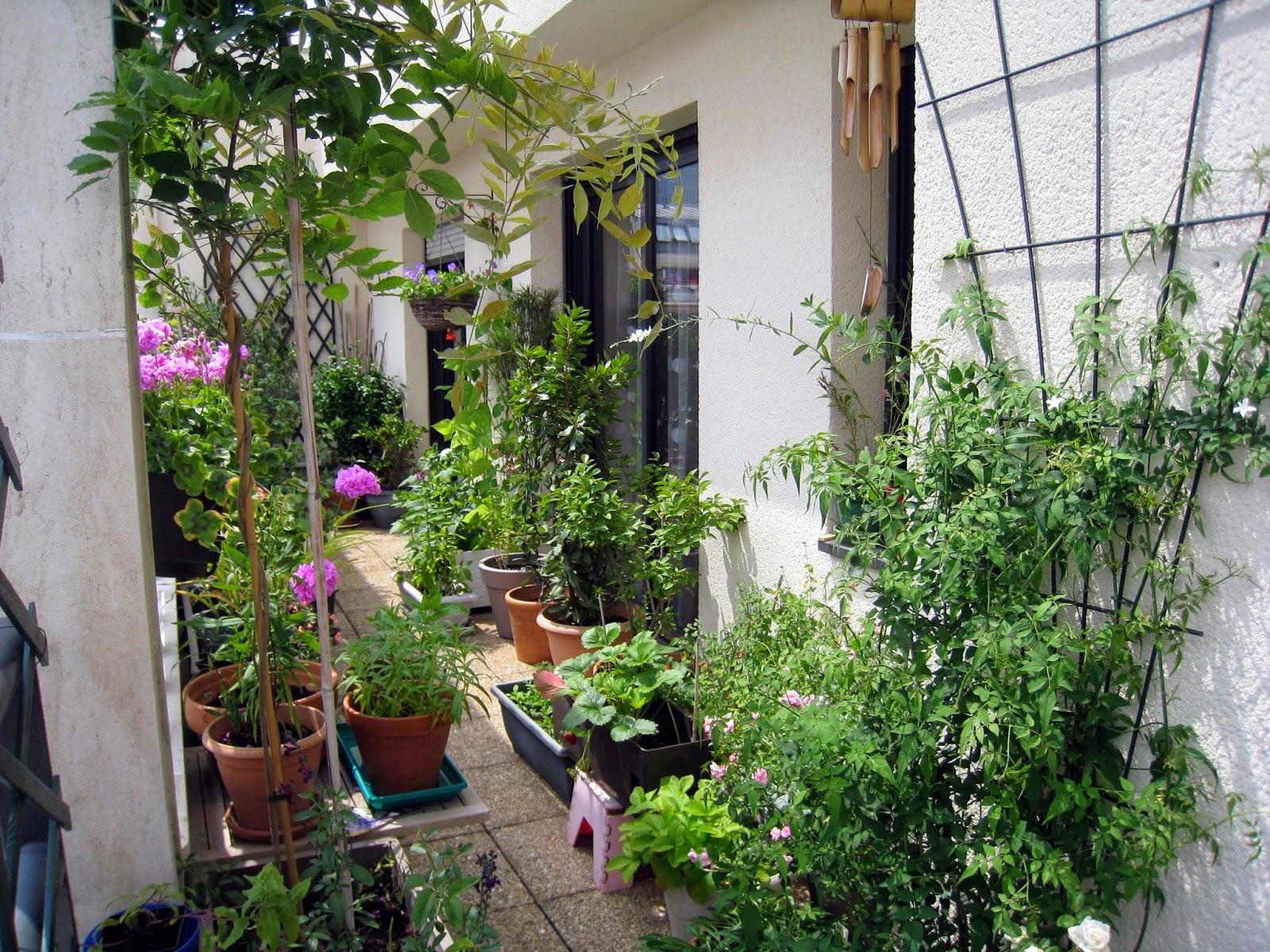 passion terrasse jasmin et mini rosier. Black Bedroom Furniture Sets. Home Design Ideas