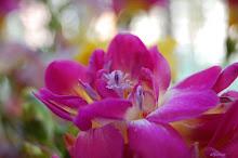 flor de la semana