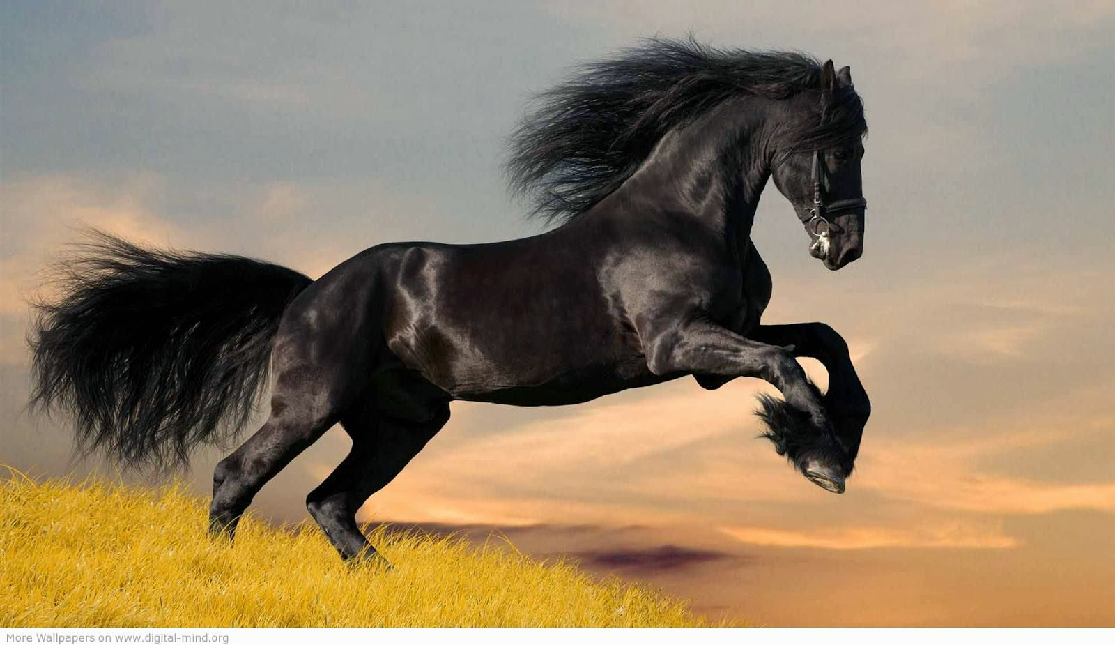 Most Inspiring   Wallpaper Horse Abstract - abstract+horses+hd+wallpapers+4  HD_11943.jpg