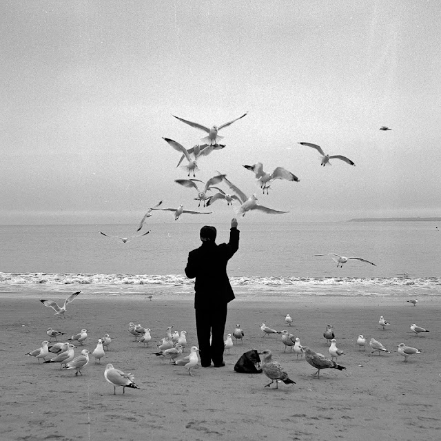 Man seagulls feeding beach ocean