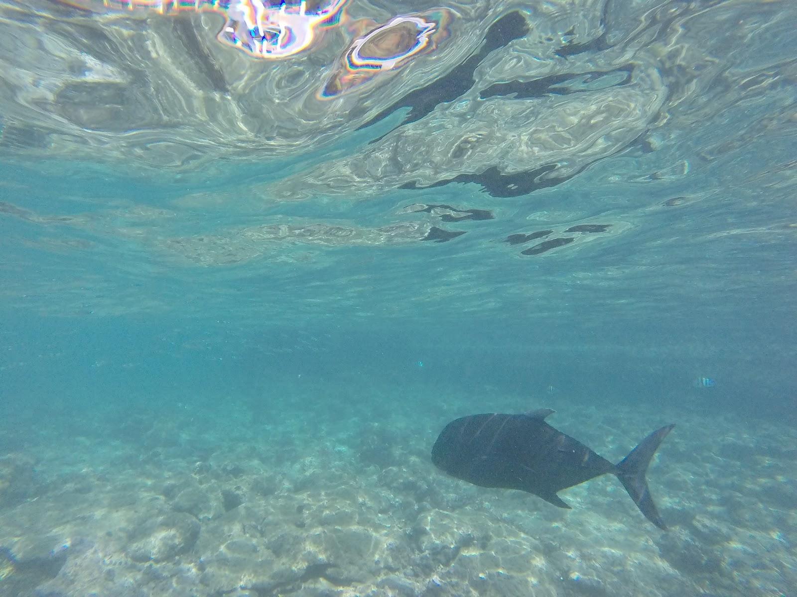 Jack Fish, Philippines
