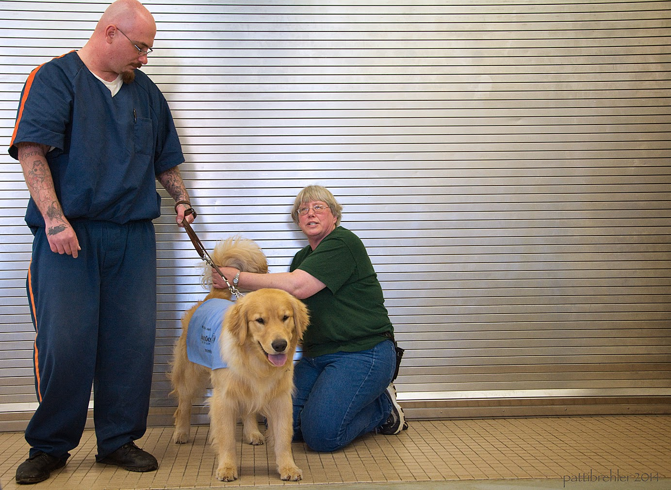 A man is standing on the left and he is wearing the blue prison uniform. He is bald and is wearing glasses, he is looking down and to the right at a golden retriever who is standing on his left facing the camera. The man is holding the dog's brown leather leash with his left hand. The golden is wearing the baby blue working jacket and he looks like he has a smile on his face, his tongue is hanging out. The woman is kneeling on the right side, holding the puppy's tail up with her left hand. She is facing the camera and talking.