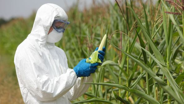 Gene Drive: Una nueva tecnología genética que pone al mundo en grave peligro