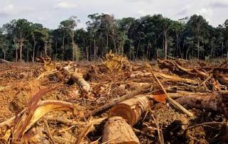 Makalah Ilmu Kealaman Dasar Tentang Illegal Logging