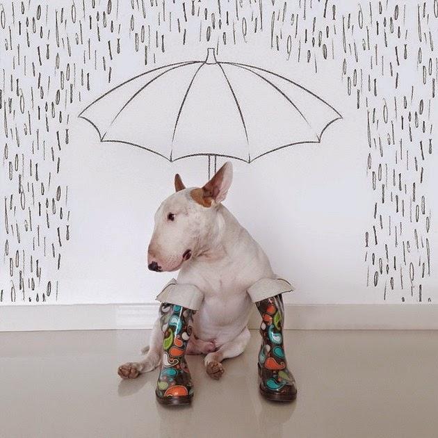 funny-bull-terrier-1