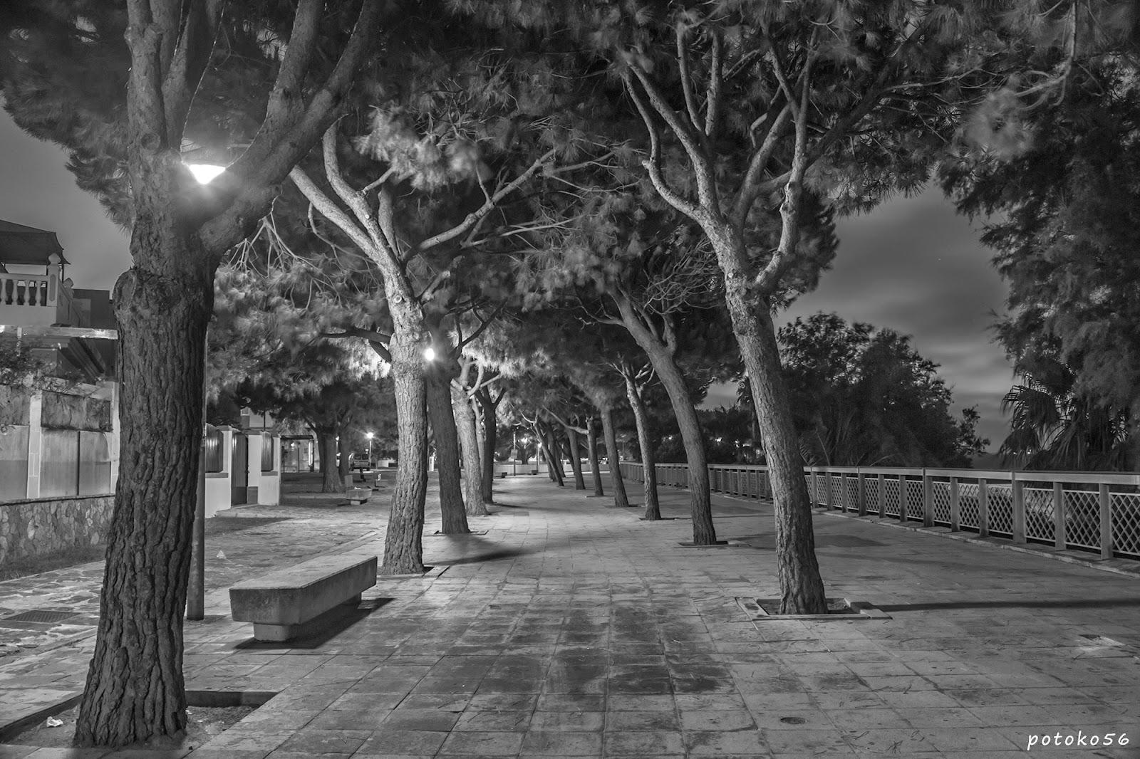 Paseo del Chorrillo arboleda Rota