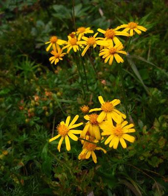 25_kwiatki.jpg