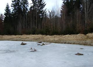 Zugefrorener Tümpel im Forstenrieder Park