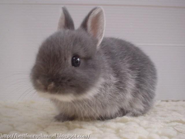 Gray nice bunny