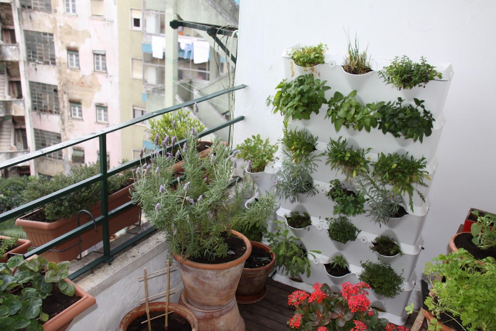 Um jardim para cuidar: Mais noticias do meu terra?o
