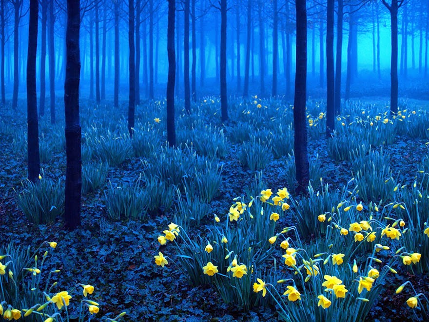 mysterious forests around the world-8