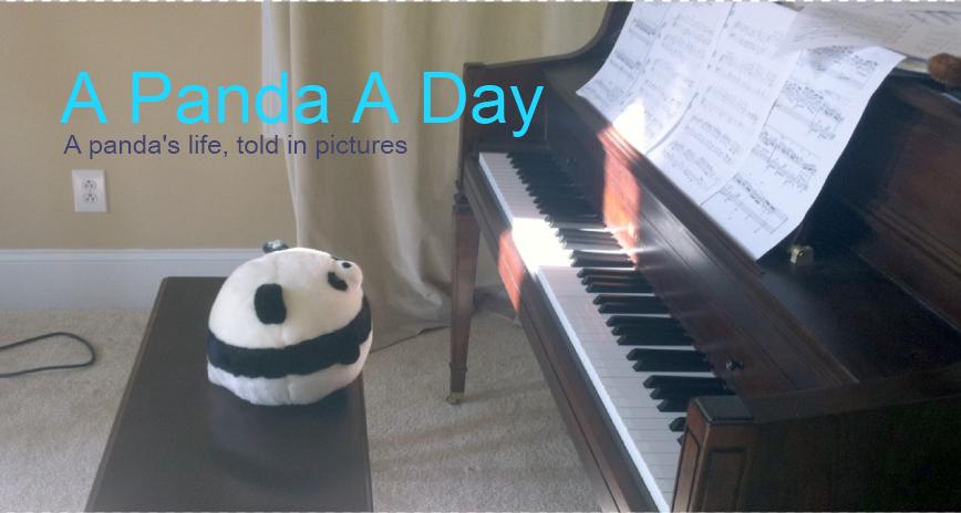 A Panda A Day