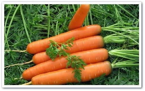 видео урок Как вырастить урожайную морковь