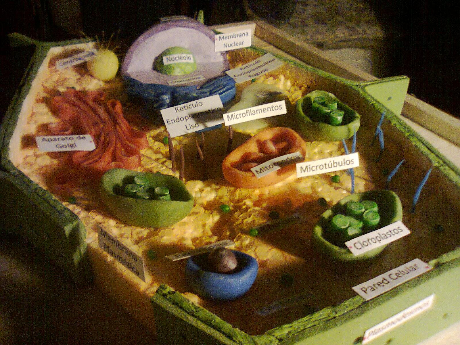 La Maqueta De Celula Vegetal