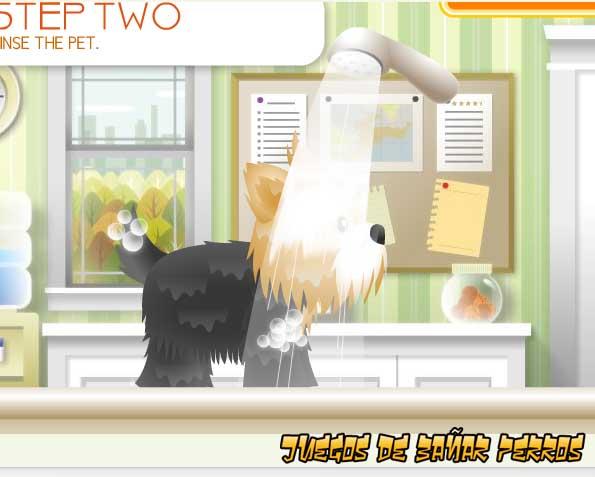 juegos para perro: