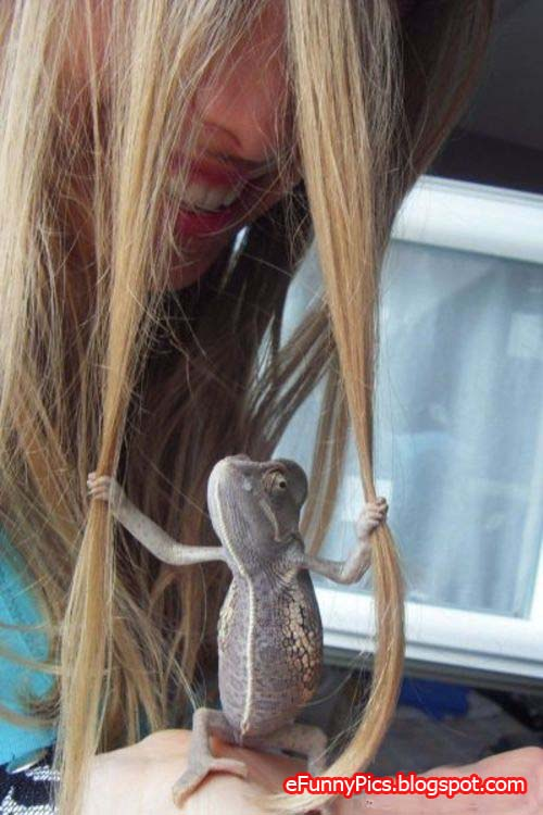 Reptile pulls hair