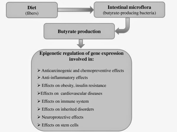 Effects of Diet on Gut Microbiota Profile and the Implications for Health and Disease