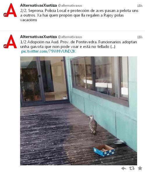 Funcionarios adoptan unha gaivota que non pode voar e está no tellado