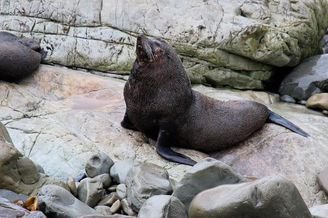 seals_new_zealand