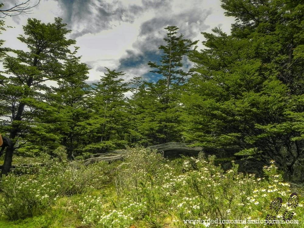 Volta da trilha para Torres del Paine