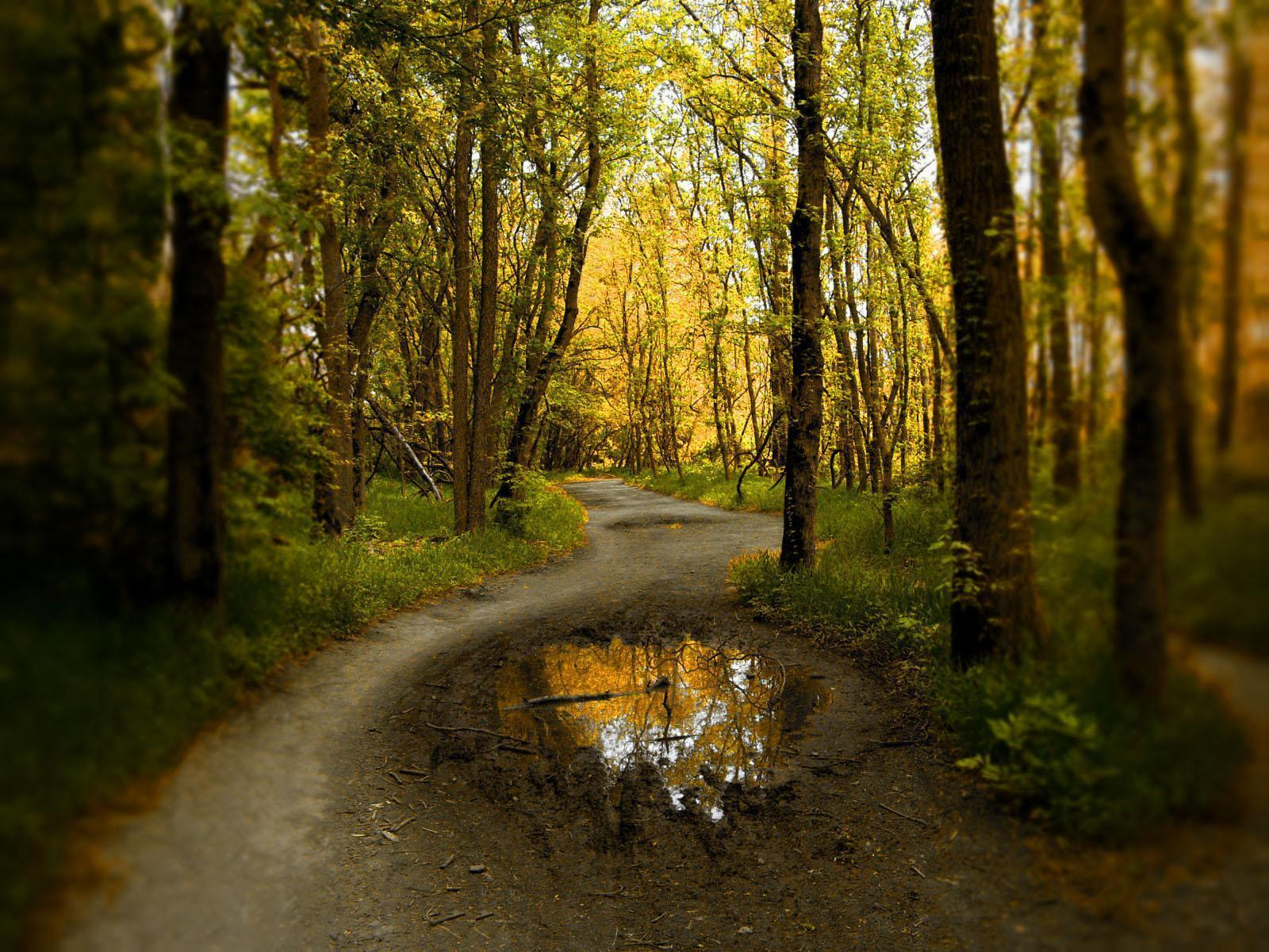 http://1.bp.blogspot.com/-2aidQg5WUzQ/TkNNZ9zqKpI/AAAAAAAALBc/BlCQdhTluX8/s1600/forest_blogdowallpaper.jpg