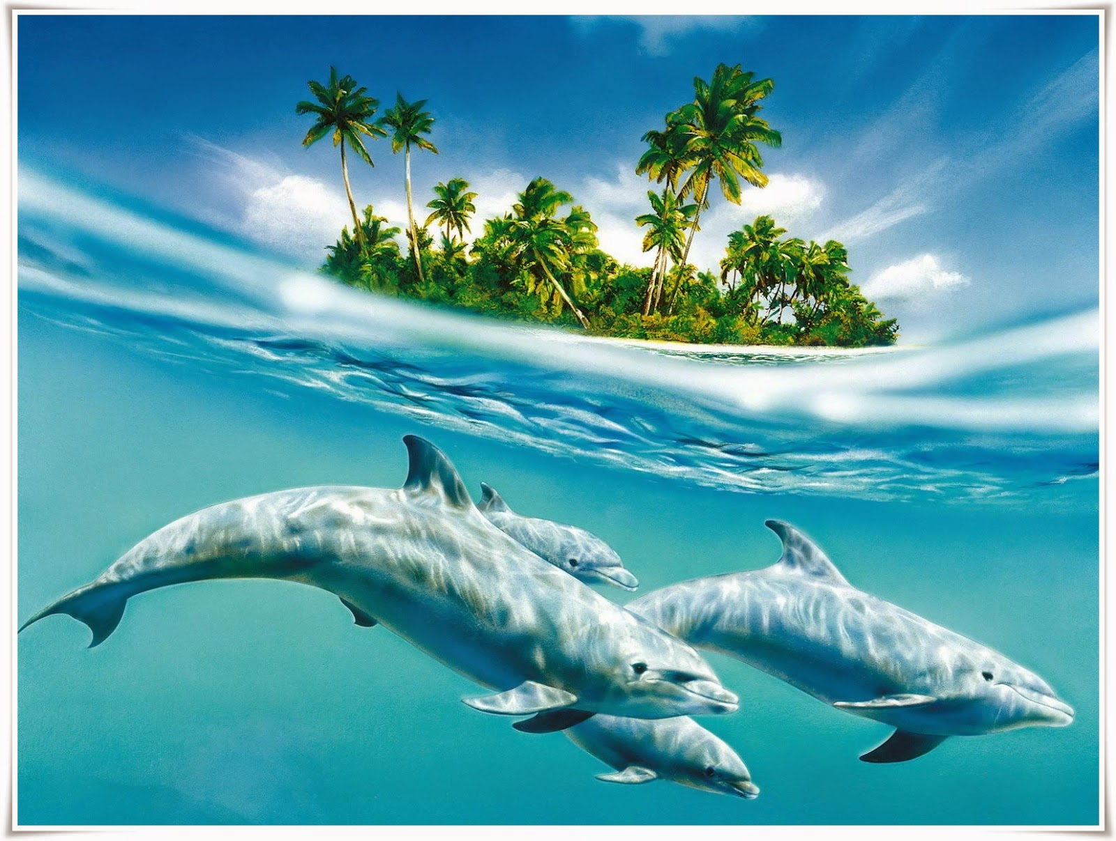 dolphin wallpaper hd